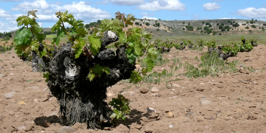 Wines from the D.O. Lower Aragon
