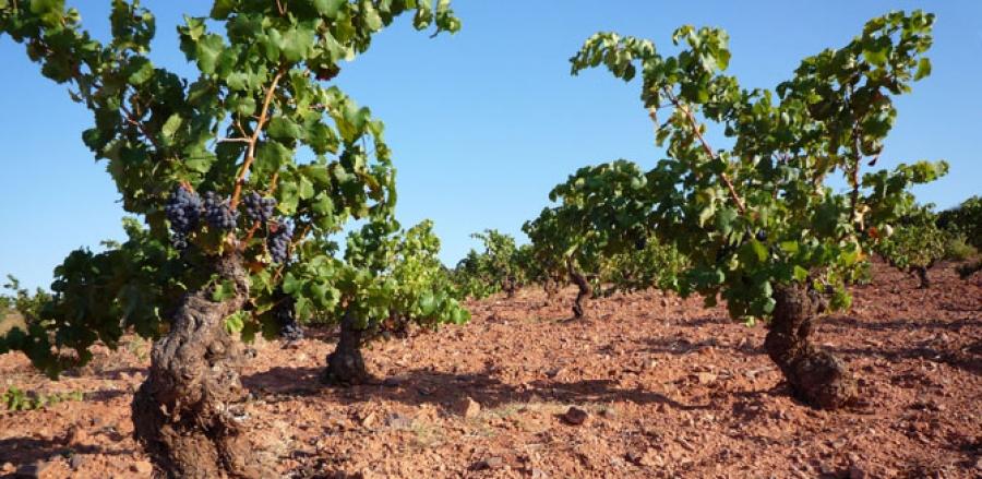 Spanische Weine vom Weingut Alto Moncayo