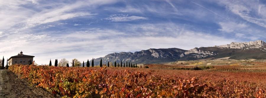 Rotweine vom Weingut Torre de Oña