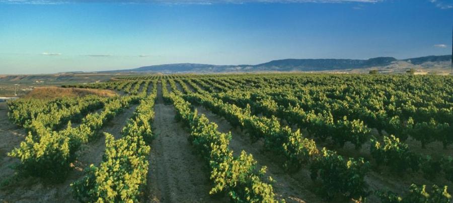 Spanische Rotweine aus dem Weingut Valdemar