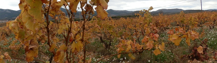 Valdejalon wines