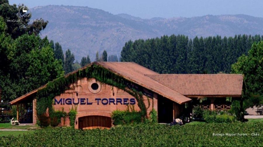 Qualitätsweine aus dem Weingut Miguel Torres