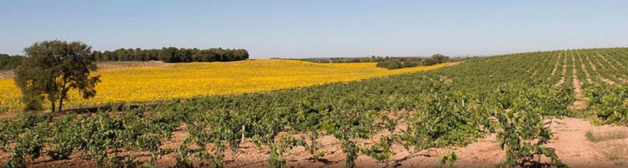Spanische Weine vom Weingut Bosque de Matasno